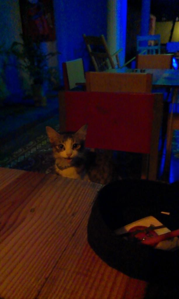 dinnercat